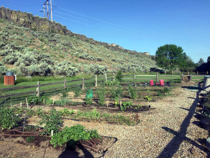 Surprise Valley HOA Community Garden